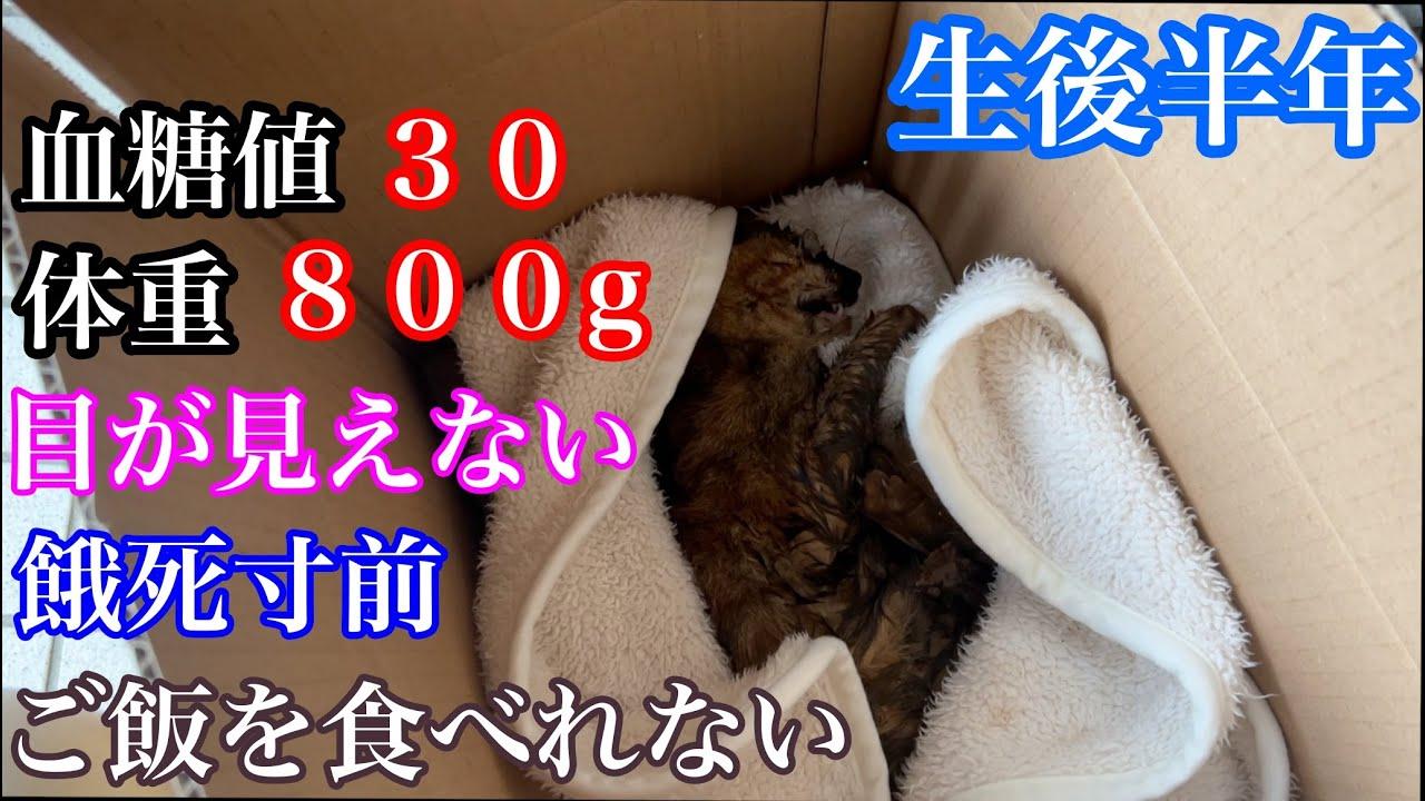 目が見えてない餓死寸前の子猫の保護依頼がありました