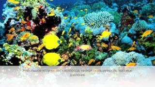 Экология. Часть 1. Организм и среда