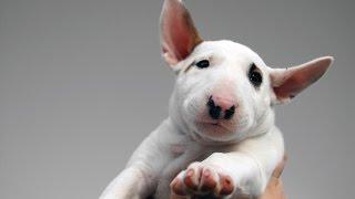 Топ 10 Самых Опасных Собак В Мире  / Top 10 Most Dangerous Dogs In The World