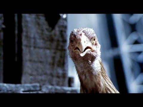 La gallina (escena) Ciudad de Dios