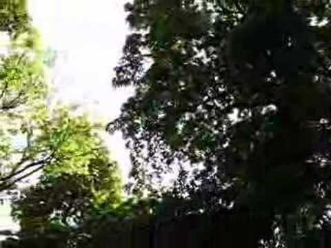 Клип Lady Jane - Гра