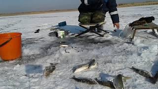 Підлідна рибалка в ЮКО.