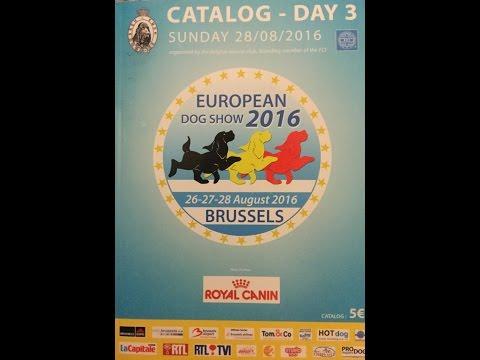 Progetto Alano - 16_08_28 European Dog Show - Brussels -  Great Dane Blue