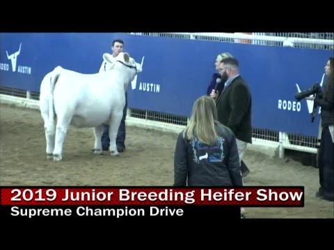 2019 Junior Breeding Heifer Show- Day 2