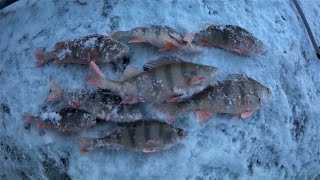 Рыбалка на окуня Бешенный окунь на безмотылку и балансир