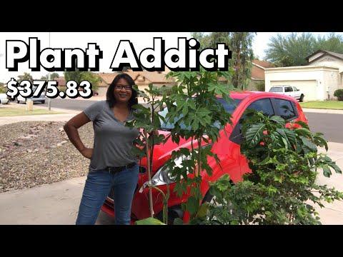 One Arizona Garden | Plant Addict ~ I love Gardening!