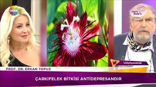 Çarkifelek Bitkisi ile Kanser Tedavisi kürü Prof Dr Erkan Topuz