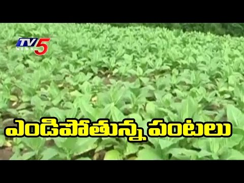 Rabi Season | Farmers Facing Problems with Water | Annapurna | TV5 News