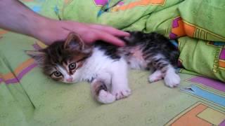 Укладываем малышку спать [о ПОЛЬЗЕ СНА для кошек- В ОПИСАНИИ]
