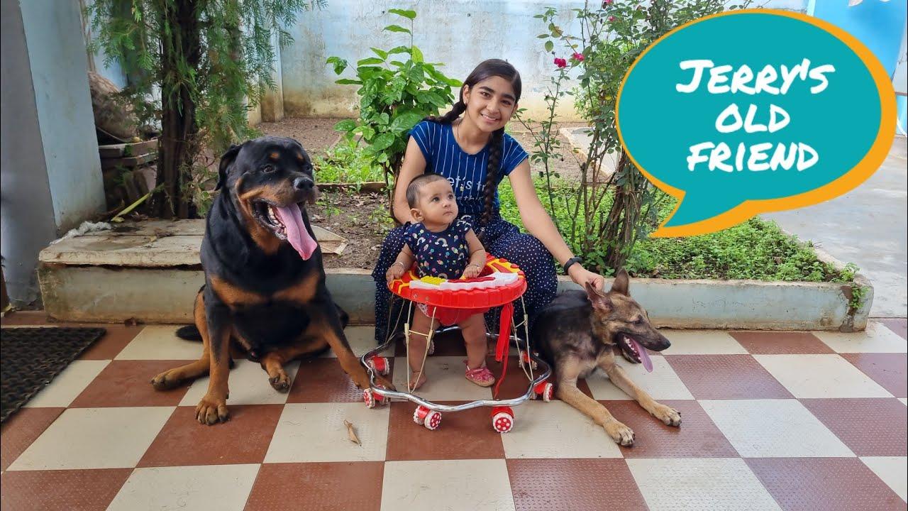 Jerry's old friend come to meet jerry|| garman shepherd dog puppy