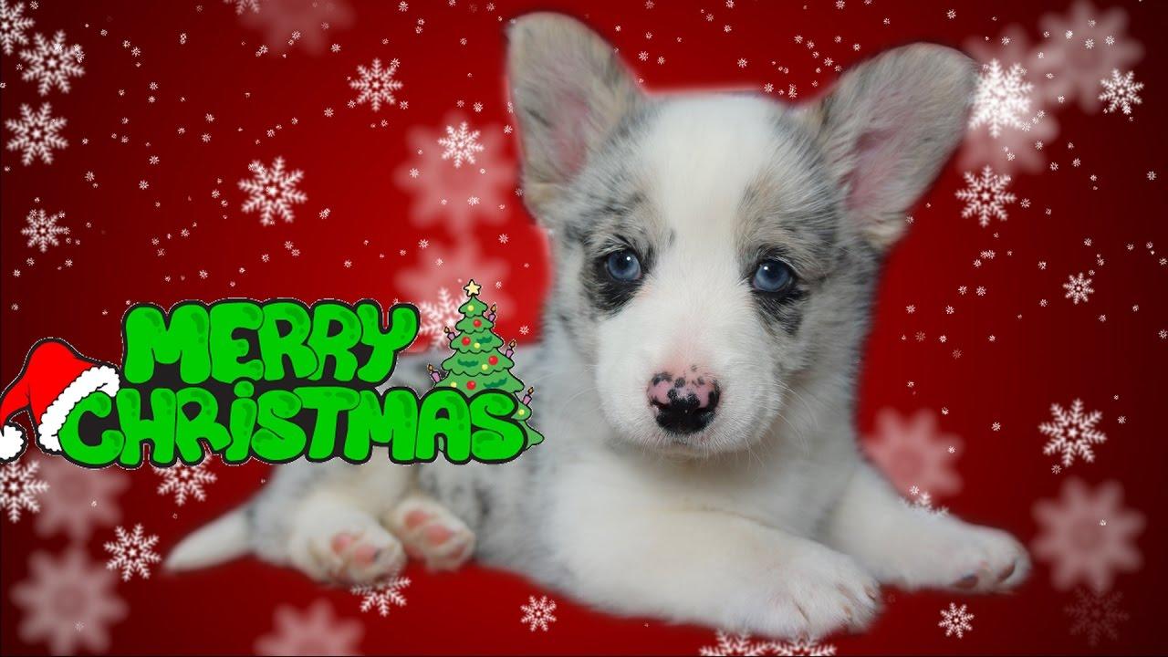 christmas puppy vlog youtube