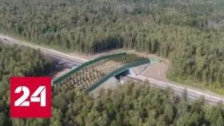 Первый в стране экодук открыли в Калужской области(, 2016-09-13T07:43:25.000Z)