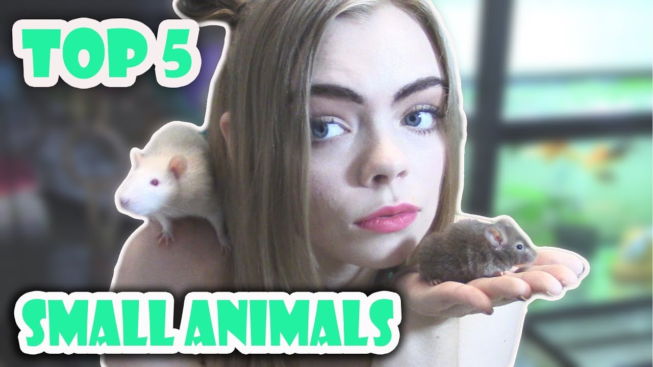 TOP 5 BEST BEGINNER SMALL PETS!! (Cute furry pets!)