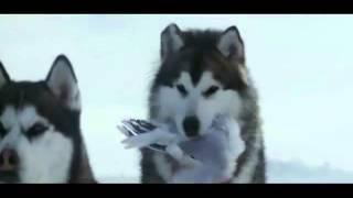 Câu truyện cảm động về những chú chó bị bỏ lại ở Nąm Cực !