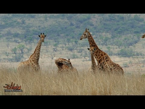 ingudlane-lodge-game-lodge---accommodation-dundee-south-africa---africa-travel-channel