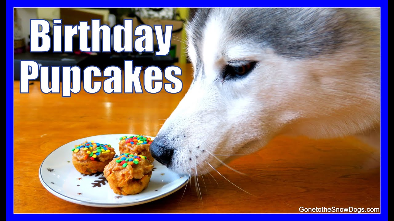 How To Make Dog Birthday Pupcakes Diy Cupcakes For Dogs