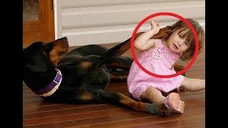 Девочка играла с доберманом, но вдруг, собака оскалилась на малышку, зарычала и схватила её...
