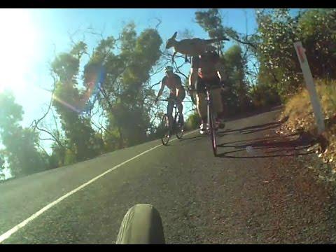 Kangaroo Attacks Car Doovi