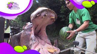 أكبر 8 أفواه حيوانات في العالم !