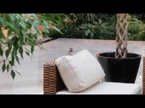 Наглый толстый воробей прыгает по диванам в Крокус Молл Мякинино