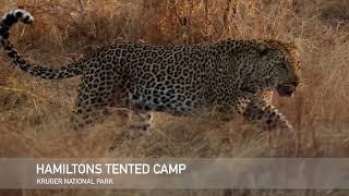Extraordinary   Hamiltons Tented Camp