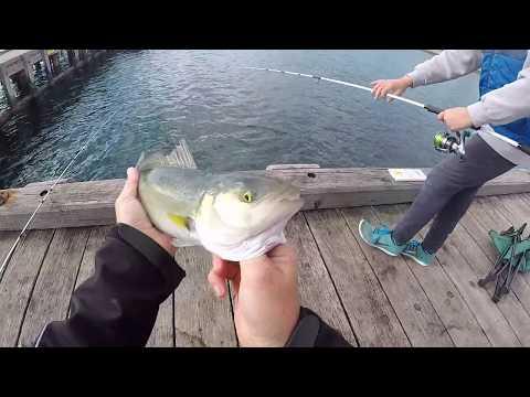 Salmon Fishing Off Pier - Mornington Peninsula