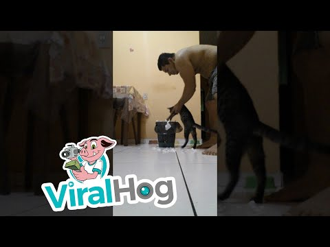 Cat Cleans His Mess || ViralHog