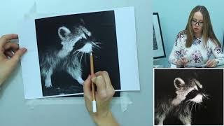 Бесплатный урок по графике: рисуем енота. Урок 3