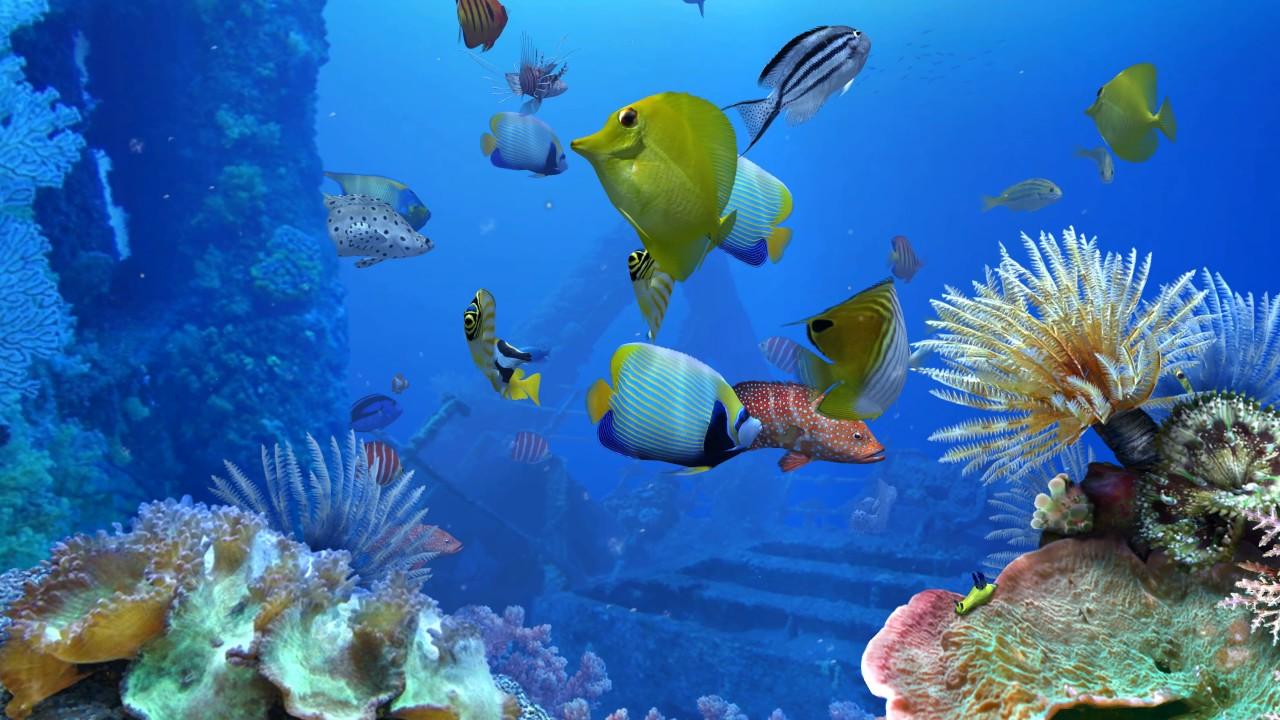 Krankheiten Der Fische Im Aquarium