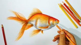 Menggambar Ikan hias Mas Koki menggunakan Pensil warna
