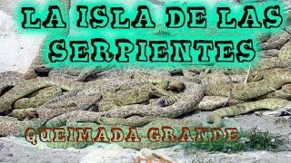 La TERRIBLE, ESPELUZNANTE Y MORTIFERA ISLA DE LAS SERPIENTES - QUEIMADA GRANDE