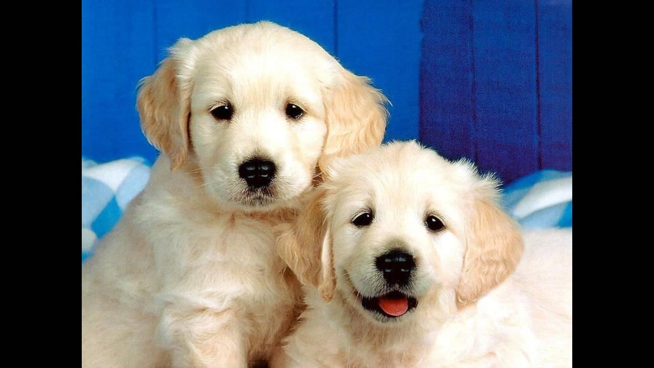 puppy cute adorable