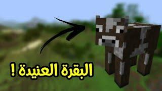 ماين كرافت 6# : صيد البقرة العنيدة !!؟ 🔥😱