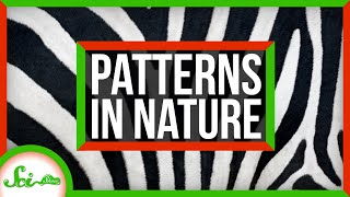 The Link Between Zebra Stripes and Sand Dunes | Natural Patterns