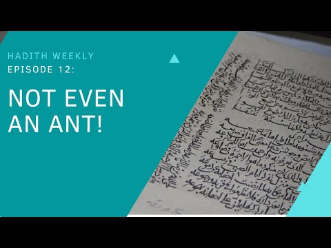 Hadith Weekly: Not Even an Ant | Sheikh Azhar Nasser