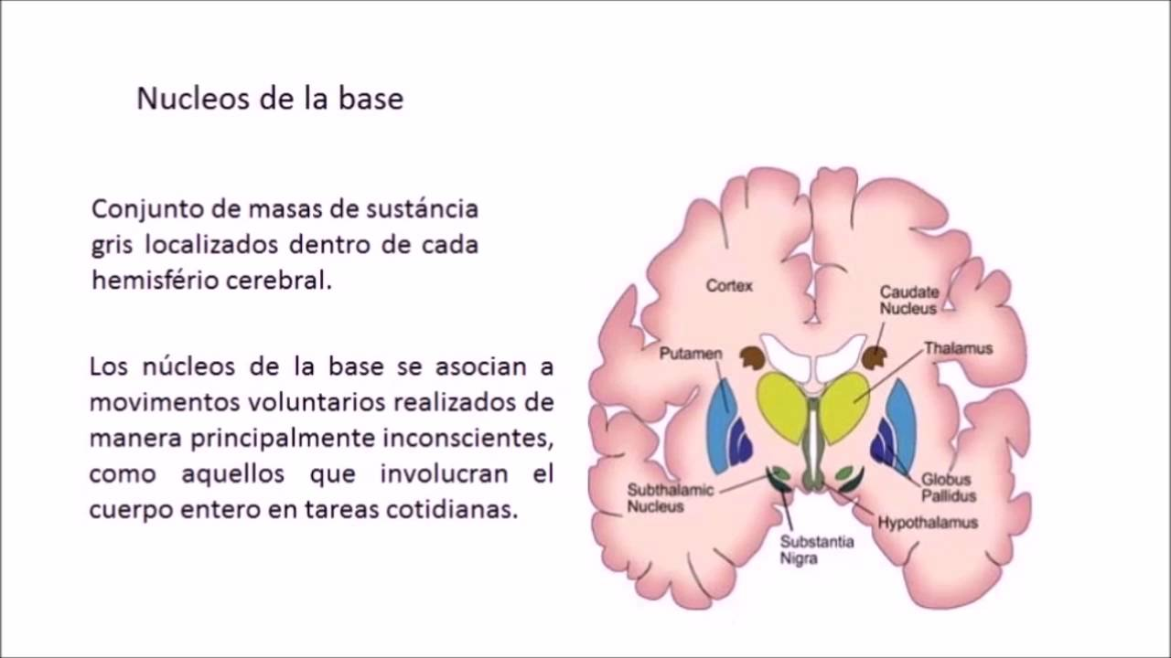 Enfermedad del parkinson - fisiopatologia, UCT - YouTube