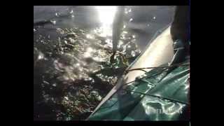 Рыбалка река Бахта, Тынеп август 2009. Видео часть 4.
