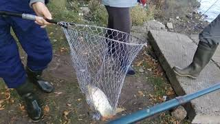 Ловля сазана на макуху! Завершение сезона, рыбалка с 30. 09. на 1. 10. 18г