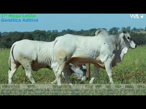 LOTE 109 - DUPLO - REM 10140, REMC A 2070 - 17º Mega Leilão Genética Aditiva 2020