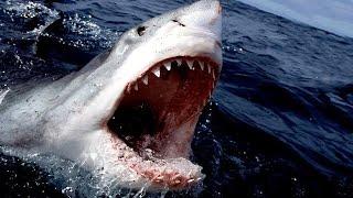 Prehistoric Shark