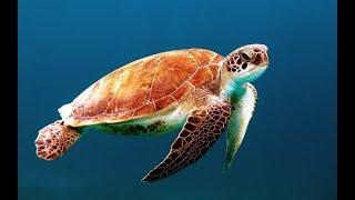 Micro Planet - Bizarre Schönheiten der Tierwelt (Doku, deutsch, Tierdoku, Tierfiilm, Naturdoku)