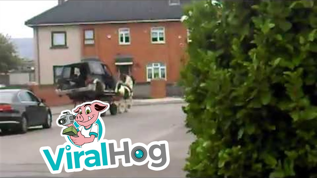 Pimped Out Horse Wagon    ViralHog