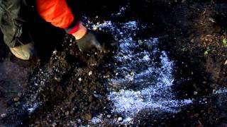 Как посадить гиацинт(, 2012-10-16T02:51:27.000Z)