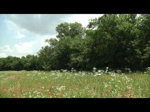 Naturalist Notebook -  Summer snow fall in Texas