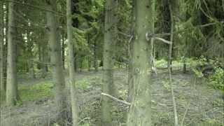 Marten Sundberg - Deep Forest (Original Mix)