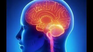 Oruç Yeni Beyin Hücreleri Oluşturup Onları Yaşlanmanın Etkilerinden Koruyor