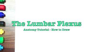 The Lumbar Plexus Explained