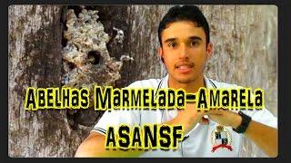 Gambar cover Abelha Marmelada-Amarela (Frieseomelitta varia) Aprendendo sobre abelhas nativas sem ferrão 3