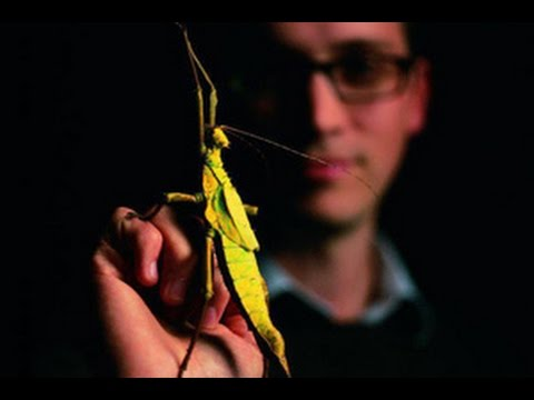 Inside the Insect Zoo with Dan Babbitt