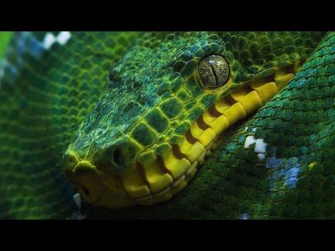 Вопрос: Как завести змею в качестве домашнего питомца?